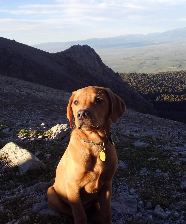Pup13